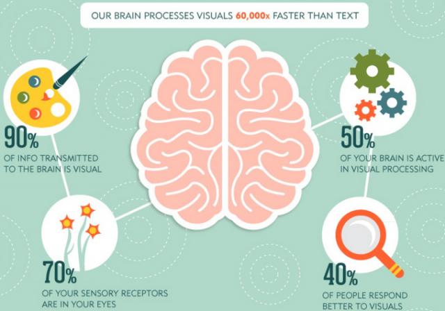 brain-is-visual